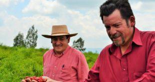 Foto: Productor de chile de árbol en Yahalica | Kiosco Informativo